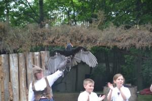 Virginie, fauconnier du Bois des Aigles